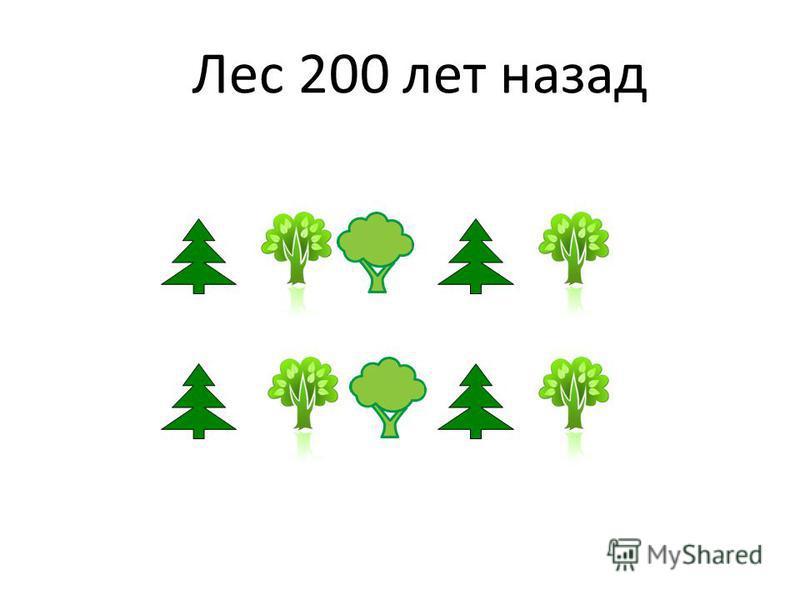 Лес 200 лет назад