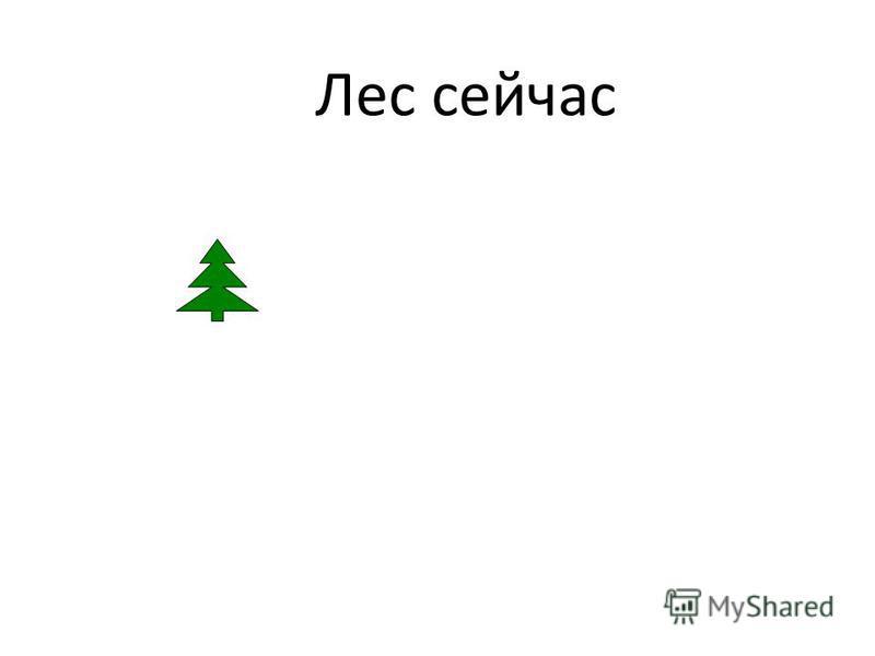 Лес сейчас