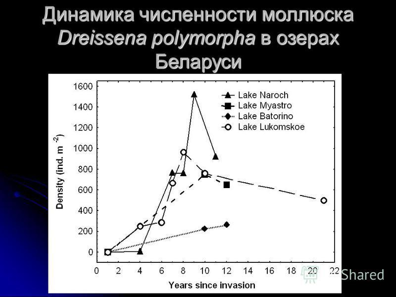 Динамика численности моллюска Dreissena polymorpha в озерах Беларуси