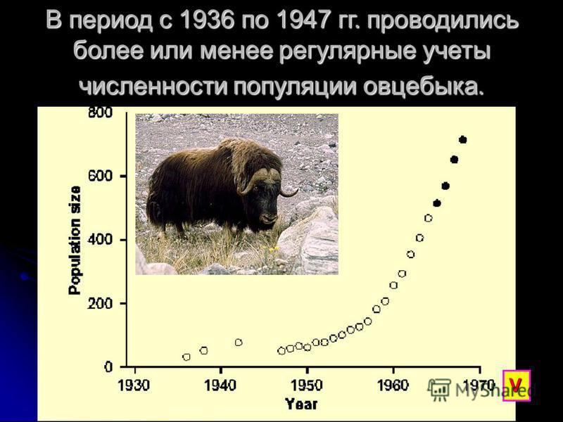 В период с 1936 по 1947 гг. проводились более или менее регулярные учеты численности популяции овцебыка. V