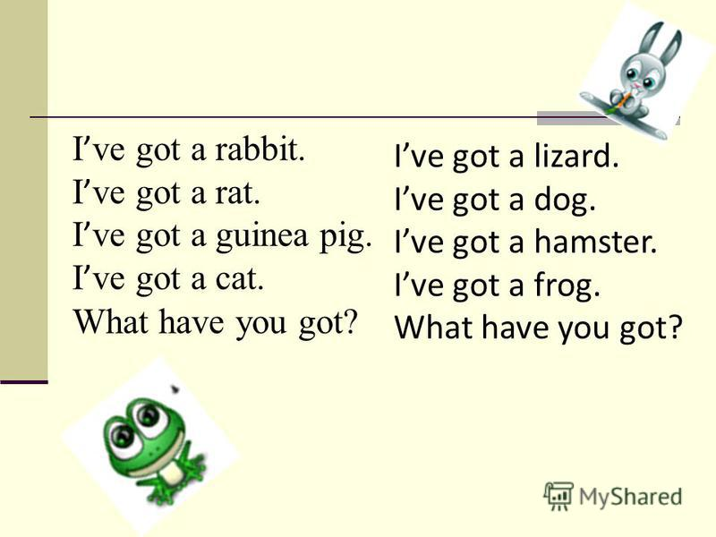 I ve got a rabbit. I ve got a rat. I ve got a guinea pig. I ve got a cat. What have you got? Ive got a lizard. Ive got a dog. Ive got a hamster. Ive got a frog. What have you got?