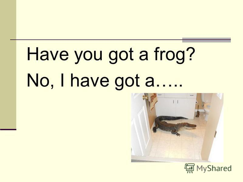 Have you got a frog? No, I have got a…..