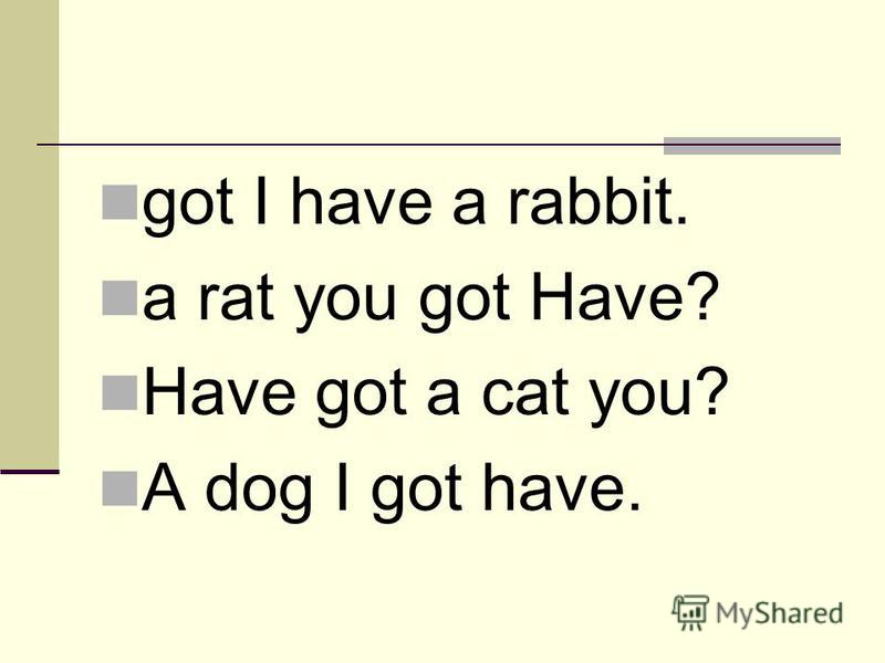 got I have a rabbit. a rat you got Have? Have got a cat you? A dog I got have.