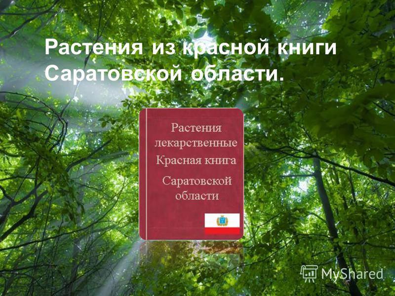 Free Powerpoint Templates Page 1 Free Powerpoint Templates Растения из красной книги Саратовской области.