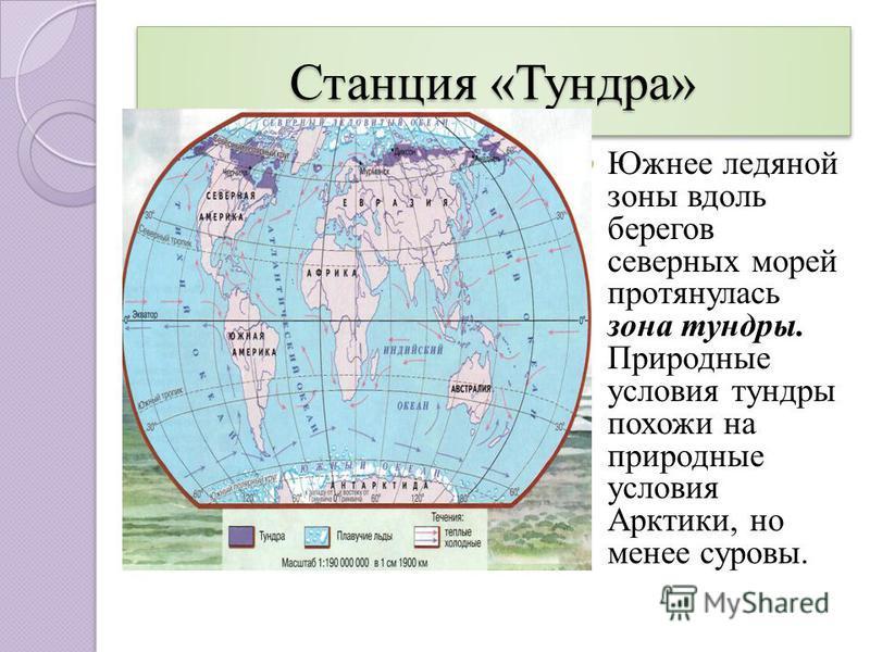 Станция «Тундра» зона тундры. Южнее ледяной зоны вдоль берегов северных морей протянулась зона тундры. Природные условия тундры похожи на природные условия Арктики, но менее суровы.