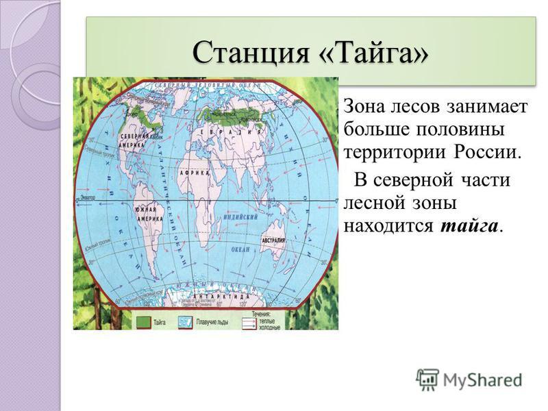 Станция «Тайга» Зона лесов занимает больше половины территории России. тайга В северной части лесной зоны находится тайга.