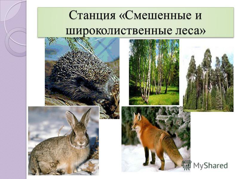 Станция «Смешенные и широколиственные леса»