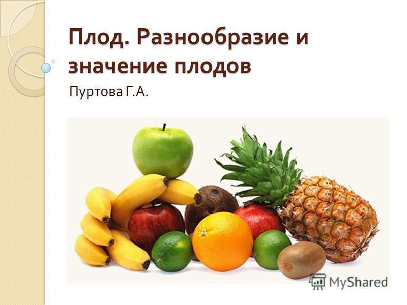 Плод. Разнообразие и значение плодов Пуртова Г. А.