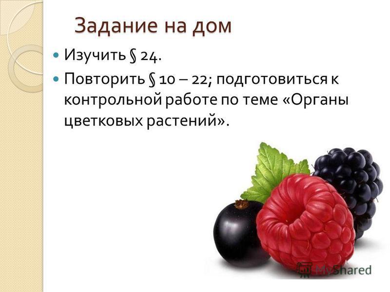 Задание на дом Изучить § 24. Повторить § 10 – 22; подготовиться к контрольной работе по теме « Органы цветковых растений ».
