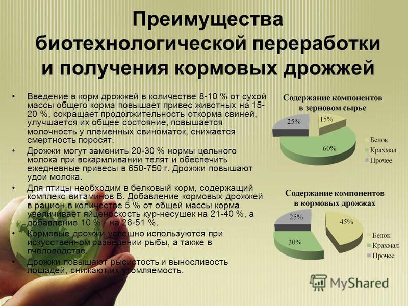 Преимущества биотехнологической переработки и получения кормовых дрожжей Введение в корм дрожжей в количестве 8-10 % от сухой массы общего корма повышает привес животных на 15- 20 %, сокращает продолжительность откорма свиней, улучшается их общее сос
