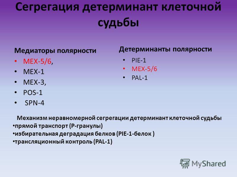 Сегрегация детерминант клеточной судьбы Медиаторы полярности MEX-5/6, MEX-1 MEX-3, POS-1 SPN-4 Детерминанты полярности PIE-1 MEX-5/6 PAL-1 Механизм неравномерной сегрегации детерминант клеточной судьбы прямой транспорт (Р-гранулы) избирательная дегра