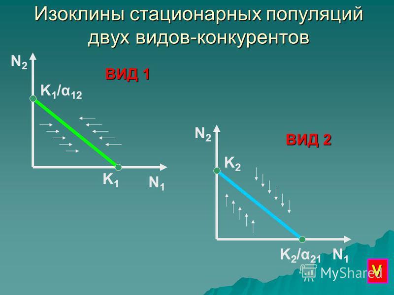 Изоклины стационарных популяций двух видов-конкурентов N2N2 N1N1 K1K1 K 1 /α 12 N1N1 K2K2 N2N2 K 2 /α 21 ВИД 1 ВИД 2 V