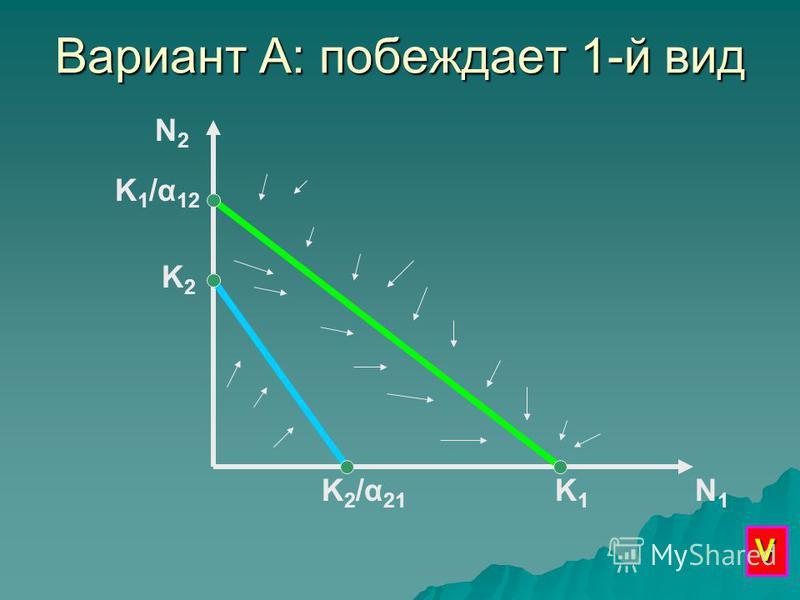 Вариант А: побеждает 1-й вид N2N2 N1N1 K1K1 K 1 /α 12 K2K2 K2/α21K2/α21 V