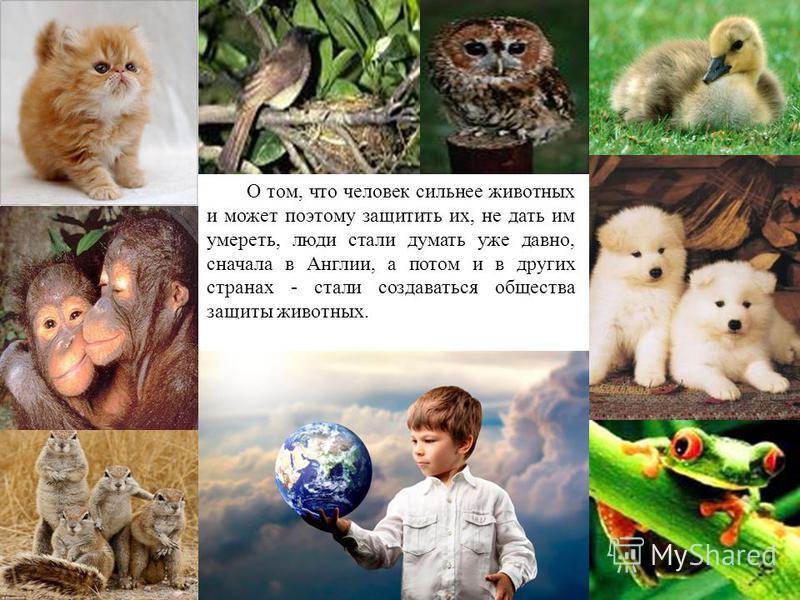 О том, что человек сильнее животных и может поэтому защитить их, не дать им умереть, люди стали думать уже давно, сначала в Англии, а потом и в других странах - стали создаваться общества защиты животных.