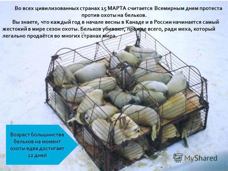 Во всех цивилизованных странах 15 МАРТА считается Всемирным днем протеста против охоты на бельков. Вы знаете, что каждый год в начале весны в Канаде и в России начинается самый жестокий в мире сезон охоты. Бельков убивают, прежде всего, ради меха, ко