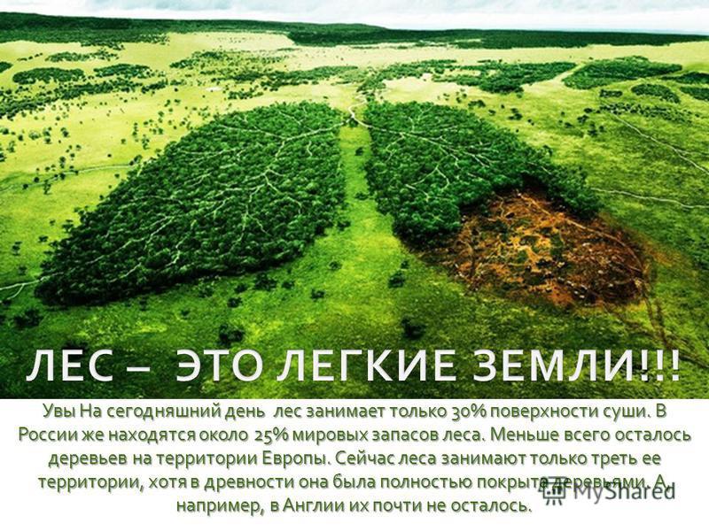Увы На сегодняшний день лес занимает только 30% поверхности суши. В России же находятся около 25% мировых запасов леса. Меньше всего осталось деревьев на территории Европы. Сейчас леса занимают только треть ее территории, хотя в древности она была по