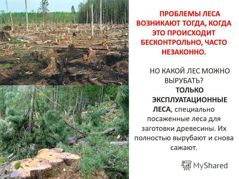ПРОБЛЕМЫ ЛЕСА ВОЗНИКАЮТ ТОГДА, КОГДА ЭТО ПРОИСХОДИТ БЕСКОНТРОЛЬНО, ЧАСТО НЕЗАКОННО. НО КАКОЙ ЛЕС МОЖНО ВЫРУБАТЬ? ТОЛЬКО ЭКСПЛУАТАЦИОННЫЕ ЛЕСА, специально посаженные леса для заготовки древесины. Их полностью вырубают и снова сажают.