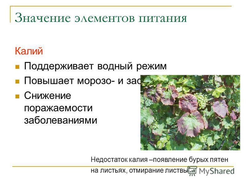 Значение элементов питания Калий Поддерживает водный режим Повышает мороза- и засухоустойчивость Снижение поражаемости заболеваниями Недостаток калия –появление бурых пятен на листьях, отмирание листвы