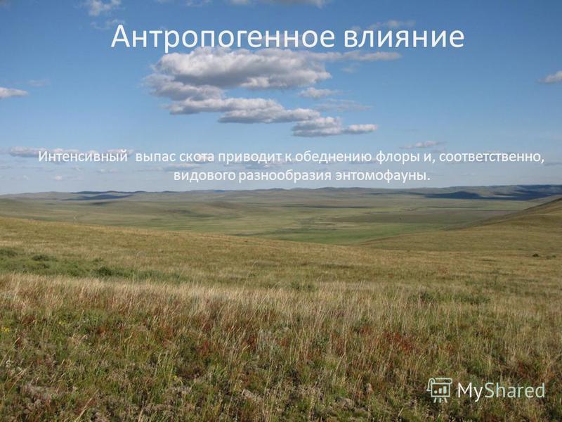 Антропогенное влияние Интенсивный выпас скота приводит к обеднению флоры и, соответственно, видового разнообразия энтомофауны.