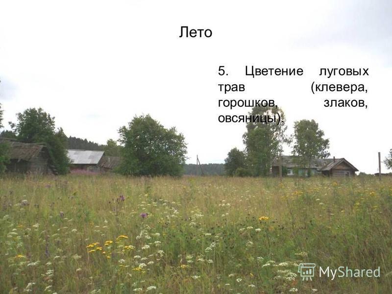 Лето 5. Цветение луговых трав (клевера, горошков, злаков, овсяницы).