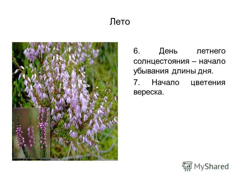 Лето 6. День летнего солнцестояния – начало убывания длины дня. 7. Начало цветения вереска.