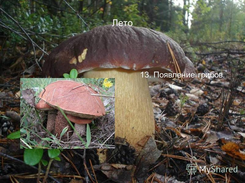 Лето 13. Появление грибов.