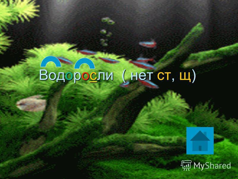Как называются растения, которые растут под водой