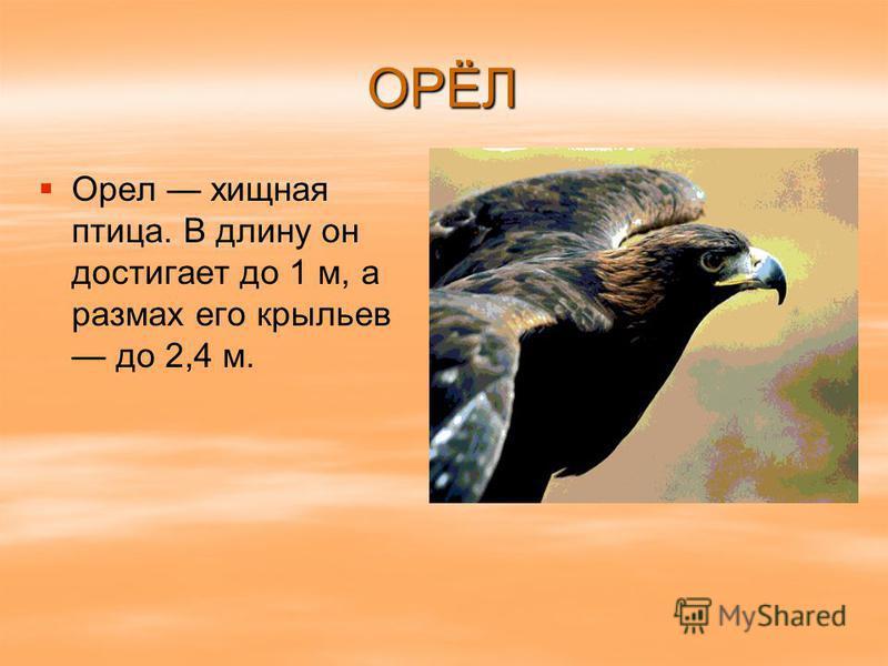 ОРЁЛ Орел хищная птица. В длину он достигает до 1 м, а размах его крыльев до 2,4 м.