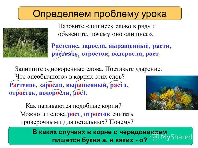 Назовите «лишнее» слово в ряду и объясните, почему оно «лишнее». Как называются подобные корни? Определяем проблему урока Растение, заросли, выращенный, расти, растаять, отросток, водоросли, рост. Запишите однокоренные слова. Поставьте ударение. Что