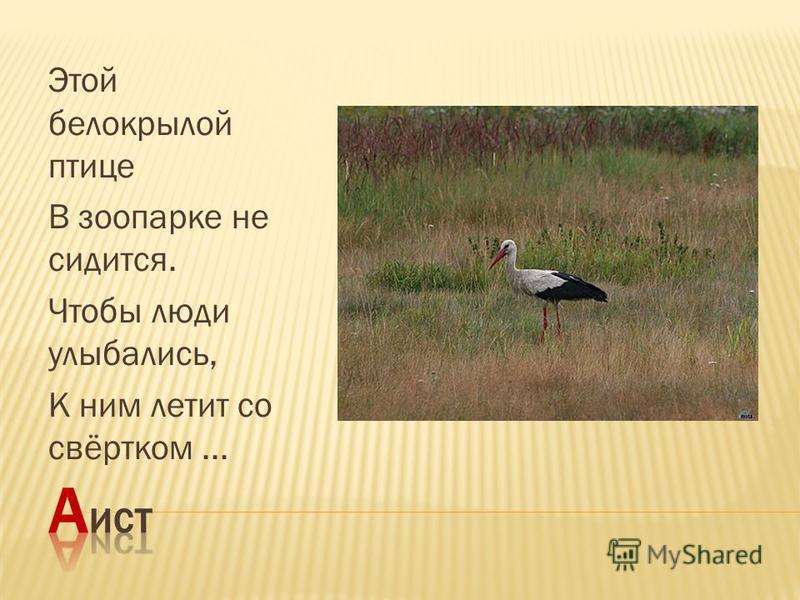 Этой белокрылой птице В зоопарке не сидится. Чтобы люди улыбались, К ним летит со свёртком...