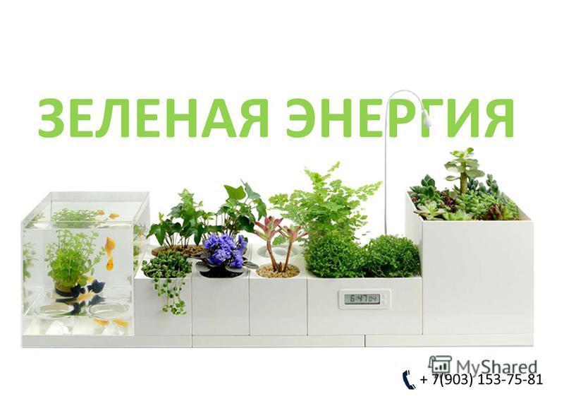 ЗЕЛЕНАЯ ЭНЕРГИЯ + 7(903) 153-75-81