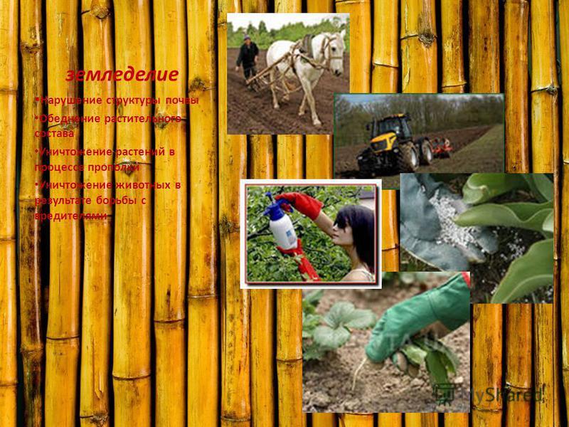 земледелие Нарушение структуры почвы Обеднение растительного состава Уничтожение растений в процессе прополки Уничтожение животных в результате борьбы с вредителями