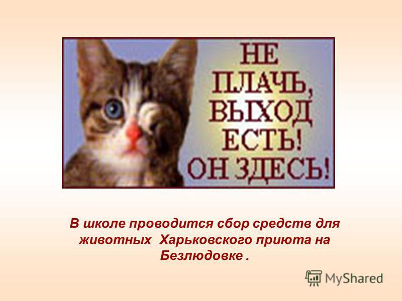 В школе проводится сбор средств для животных Харьковского приюта на Безлюдовке.