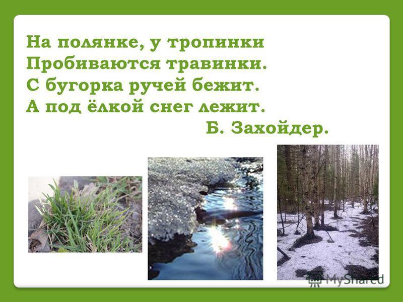 На полянке, у тропинки Пробиваются травинки. С бугорка ручей бежит. А под ёлкой снег лежит. Б. Захойдер.