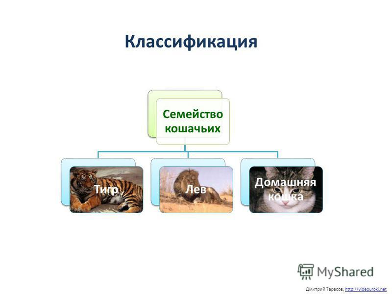 Классификация Дмитрий Тарасов, http://videouroki.nethttp://videouroki.net Семейство кошачьих Тигр Лев Домашняя кошка