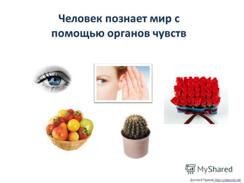 Человек познает мир с помощью органов чувств Дмитрий Тарасов, http://videouroki.nethttp://videouroki.net
