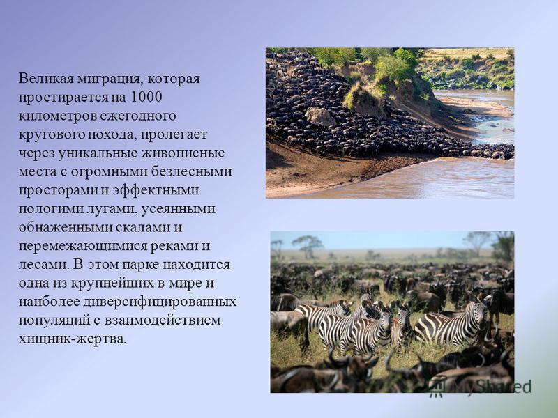 Великая миграция, которая простырается на 1000 километров ежегодного кругового похода, пролегает через уникальные живописные места с огромными безлесными просторами и эффектными пологими лугами, усеянными обнаженными скалами и перемежающимися реками