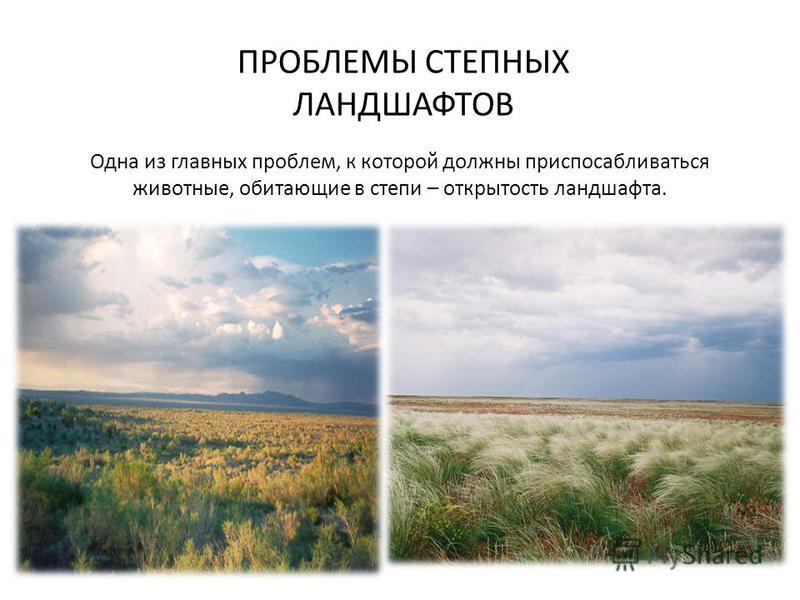 Одна из главных проблем, к которой должны приспосабливаться животные, обитающие в степи – открытость ландшафта. ПРОБЛЕМЫ СТЕПНЫХ ЛАНДШАФТОВ