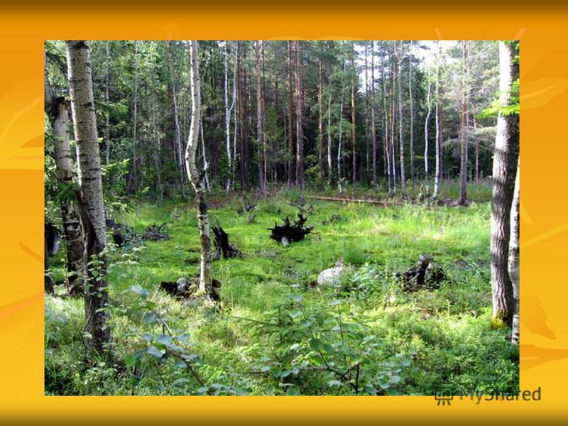 Лес рос сотни лет, а сгорел за считанные часы..