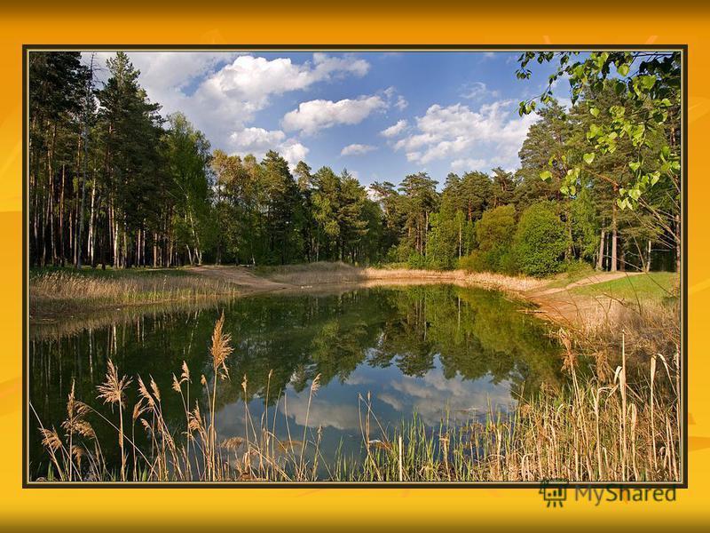 Охрана леса.