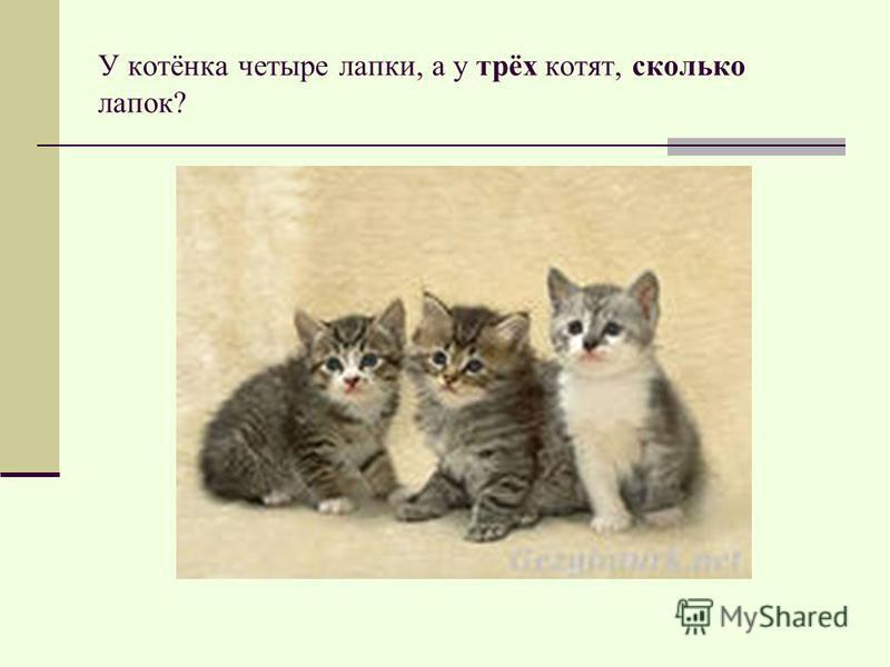 У котёнка четыре лапки, а у трёх котят, сколько лапок?