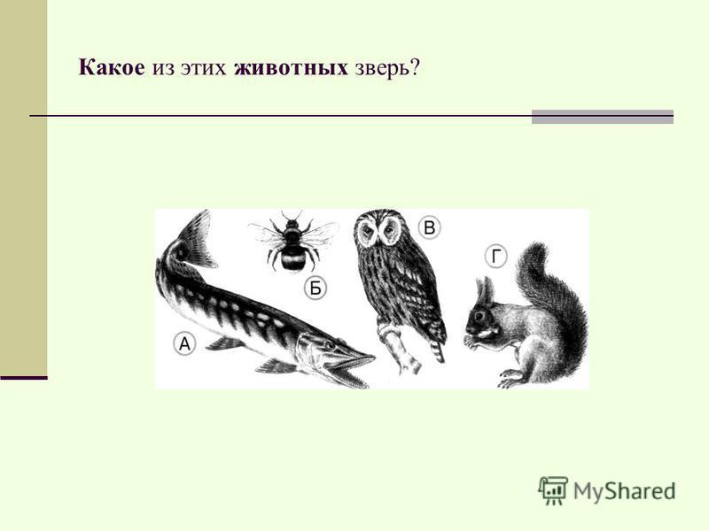 Какое из этих животных зверь?