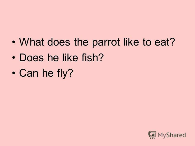 What does the parrot like to eat? Does he like fish? Can he fly?