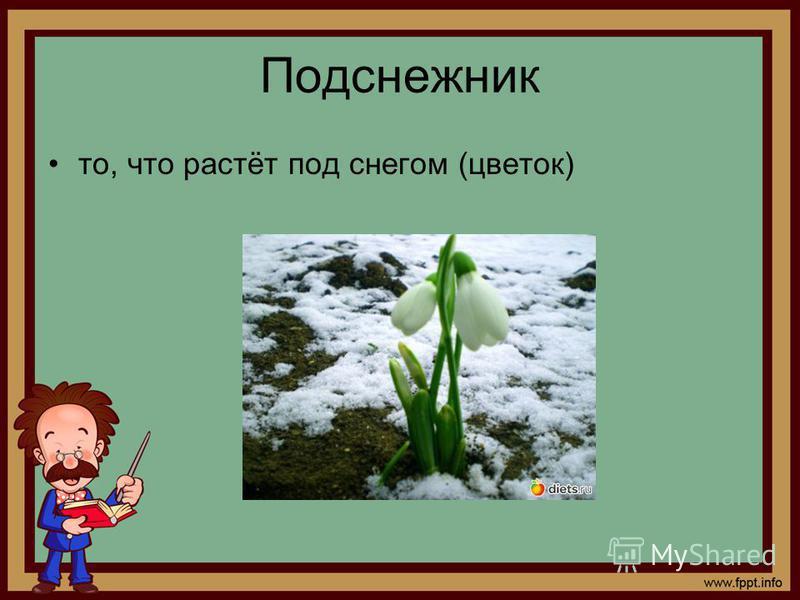 Подснежник то, что растёт под снегом (цветок)