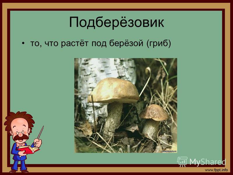 Подберёзовик то, что растёт под берёзой (гриб)