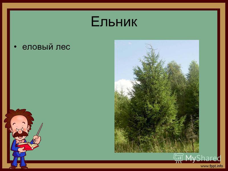 Ельник еловый лес