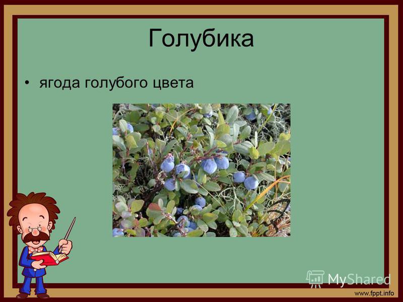 Голубика ягода голубого цвета