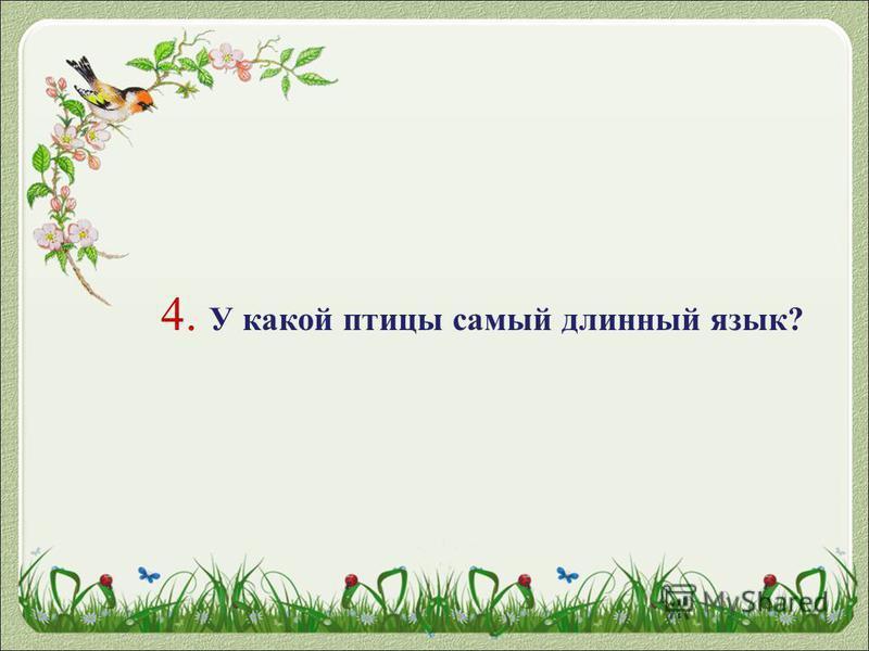 4. У какой птицы самый длинный язык?