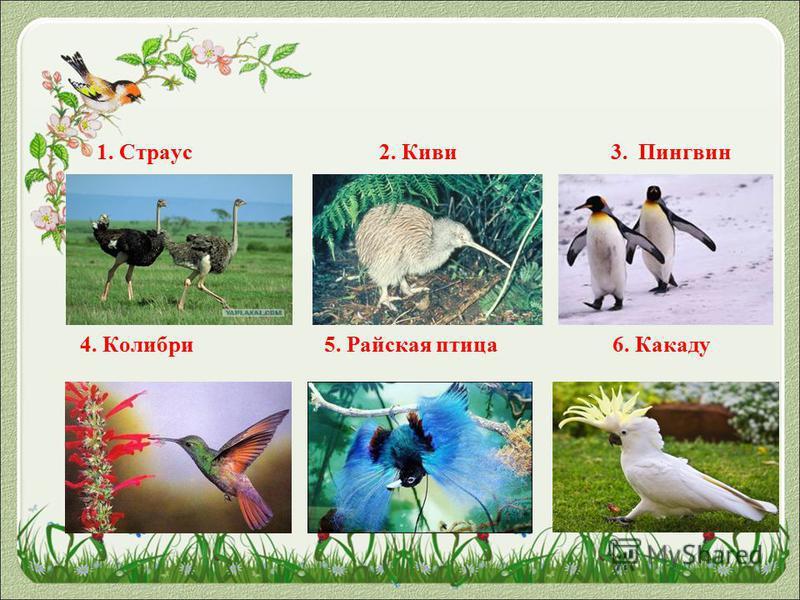 1. Страус 2. Киви 3. Пингвин 4. Колибри 5. Райская птица 6. Какаду
