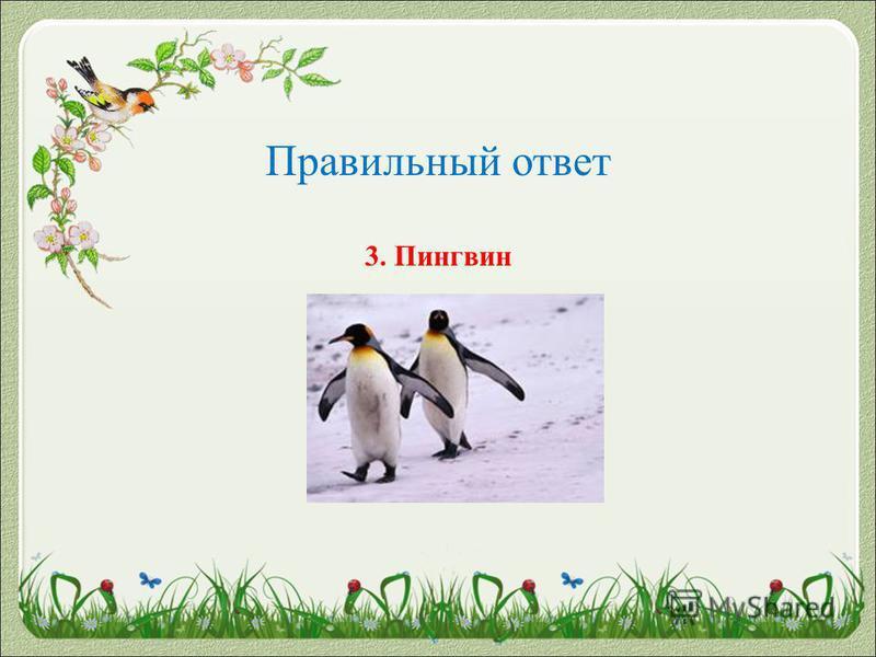 Правильный ответ 3. Пингвин